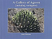 agaves small